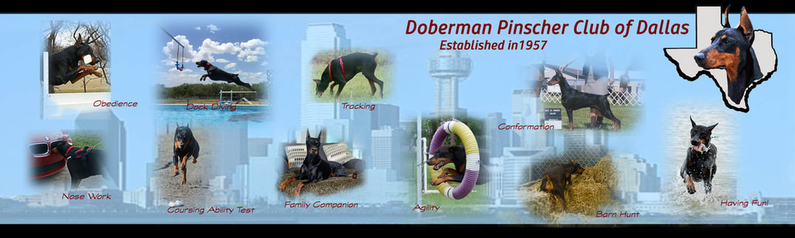 Doberman Pinscher Club of Dallas - Home